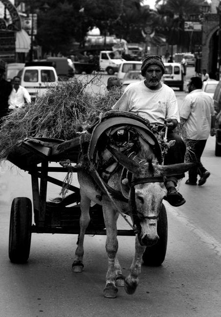 Street Tunis