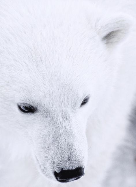 Àrtic
