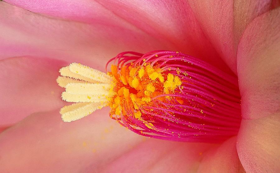 flor 4