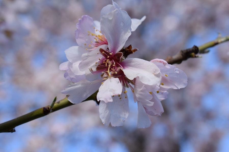 Primavera anticipada