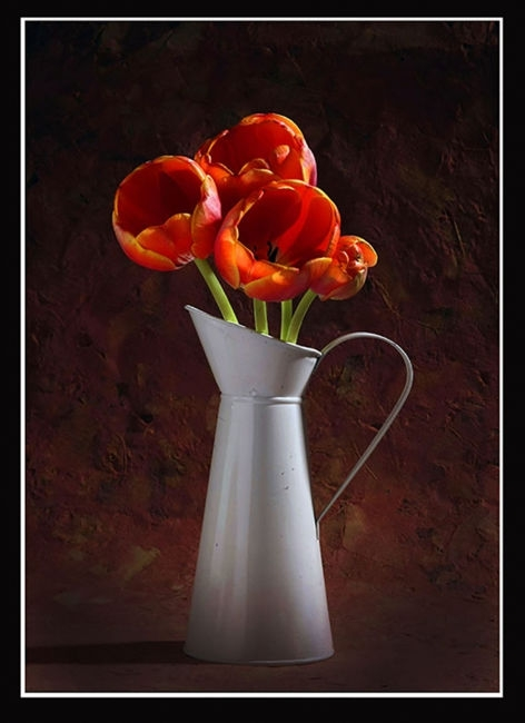 Tulipans vermells