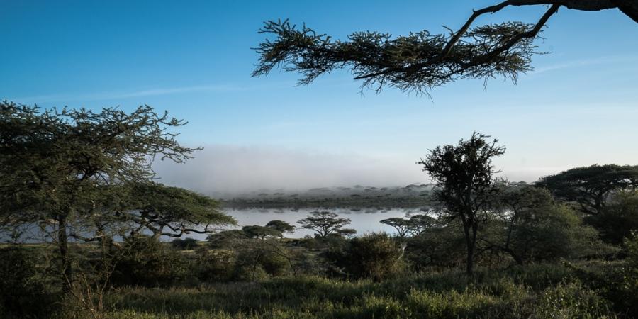 Africa desperta