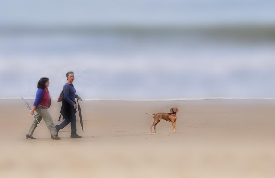 Paseo por la playa copia