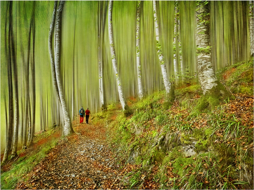 Selva de Irati-Navarra
