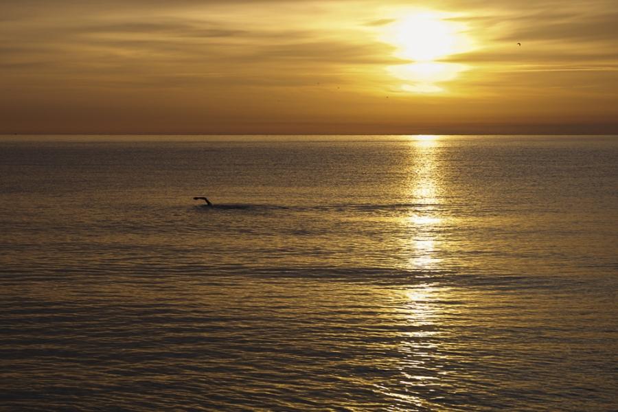 Nedador solitariNedant al mar a l'albada