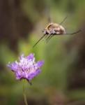 Animals en moviment. 3r premi. De flor en flor. Miquel Pons Bassas