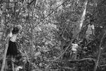 2001 Jocs de criatures, a l'arbreda