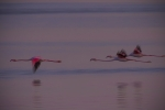 flamingos in the night
