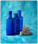 Bodegó blau i cargol de mar