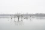 Cormorans al Llac