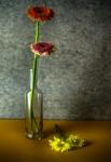 cuatre flors