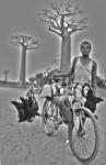 Madagascar transporte de gallinas