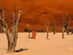 colors al desert
