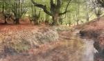 Bosc encantat