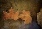 soplo de otoño