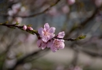 Esclat de primavera