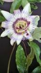 Flor al detall