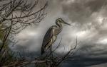 Oiseau aigrette