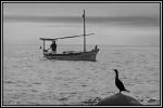 vaixell i ocell
