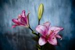 tres flors