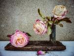 tres roses