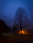 Resplandor a l'arbre