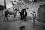 Cavallu