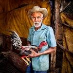 Criador de gallos de pelea