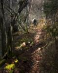 Oerdida en el Bosque
