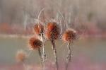 Flor d'hivern