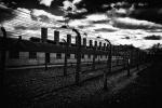 deshumanització