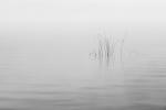 La simplicidad de la naturaleza