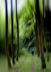 Caminat pel bosc
