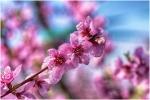 Floració
