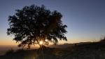 L'Alsina de Can VallsAlsina centenària a La Garriga, a prop de l'ermita de Sant Cristòfol de 1000 anys, amb vistes espectaculars del Vallès i fins al port de Barcelona