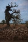 la dona arbre